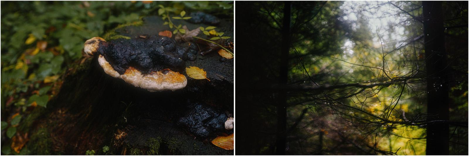 Ania & Szczepan | leśna sesja w Bieszczadach 29