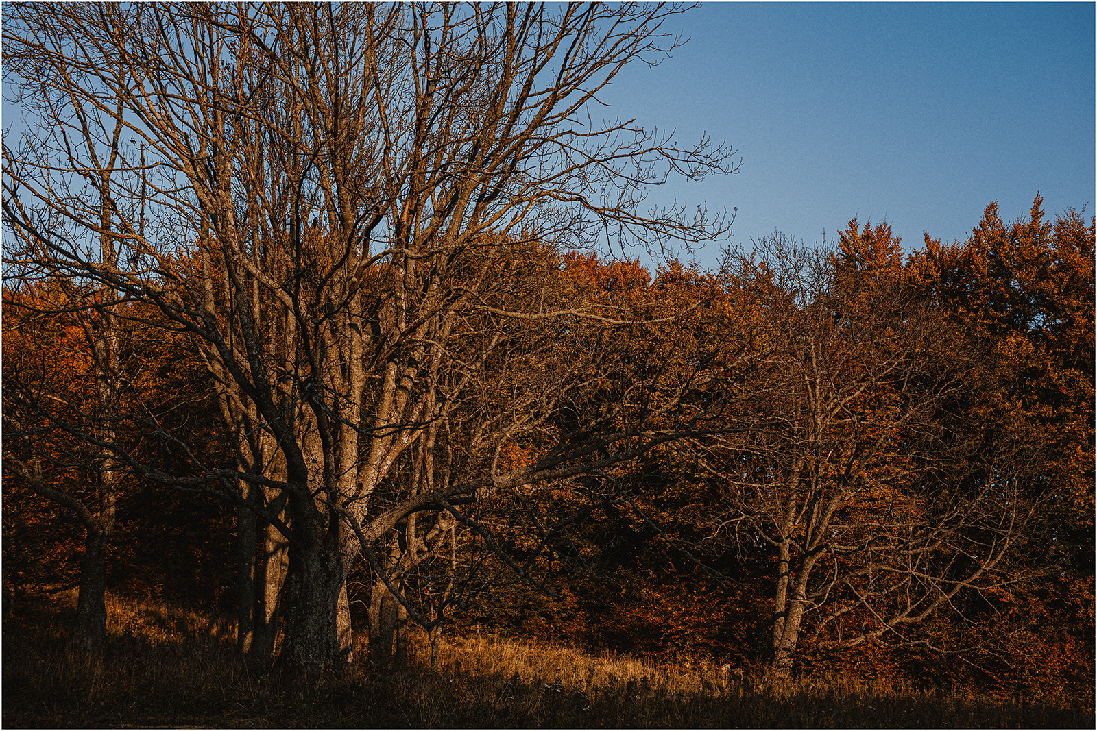 Jesień w Chatce Puchatka, czyli kulisy sesji Gosi i Tomka 16